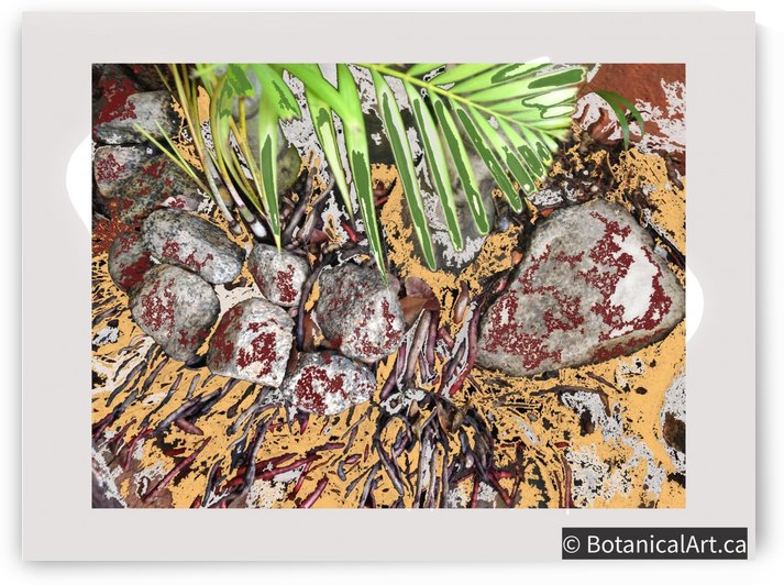 Palm Leaf with Roots by BotanicalArt ca