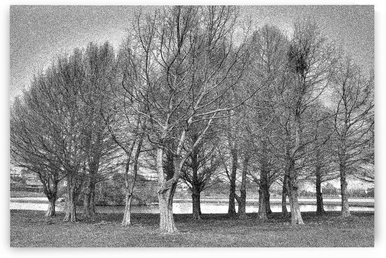 Tree IX by Carlos Wood