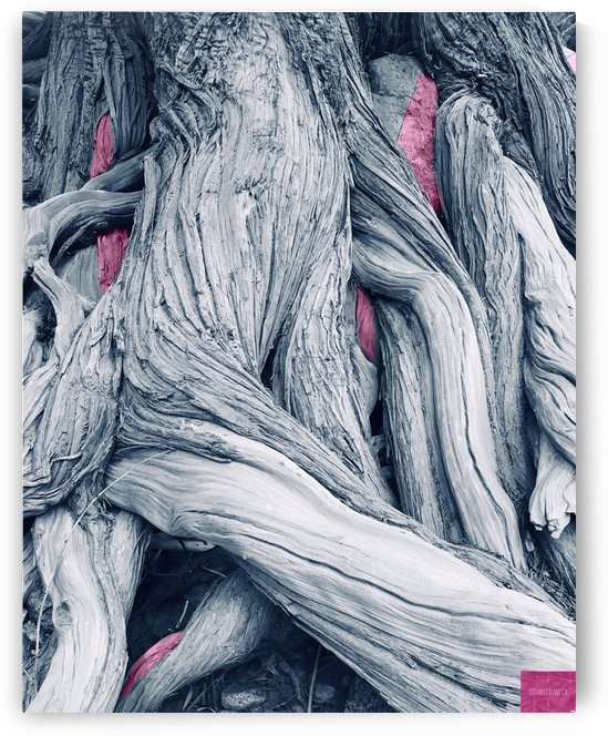 Twisted Tree with Pink by BotanicalArt ca