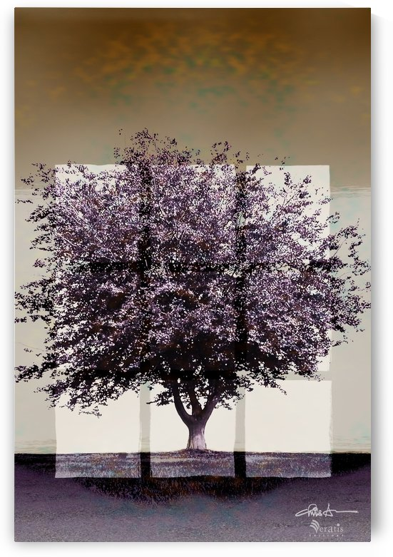 Window2 on a Purple Tree 2x3 by Veratis Editions