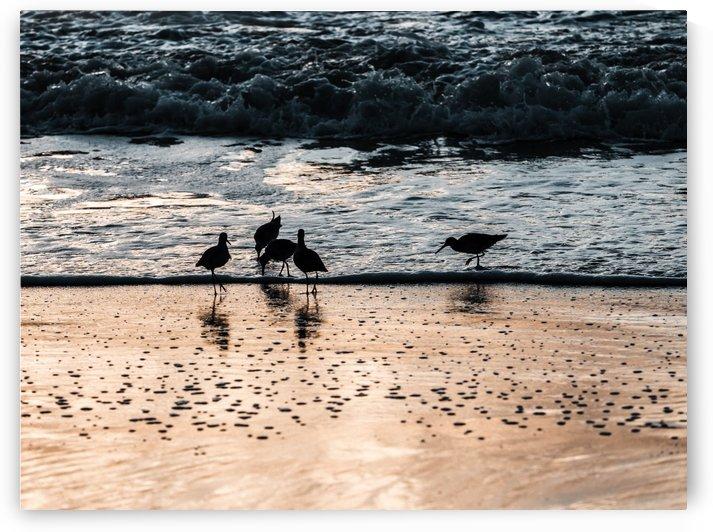 Birds on Sunset Beach by Raquel Creative