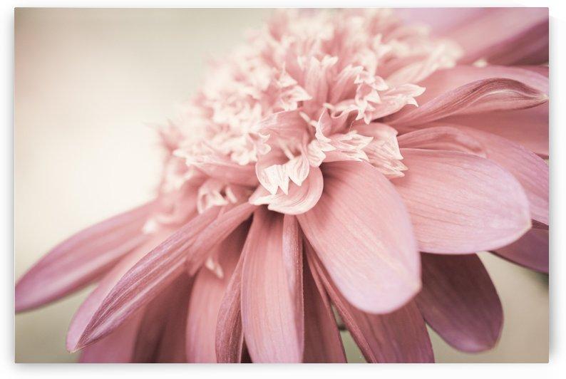 pink petal flower  by Judy H McPhee