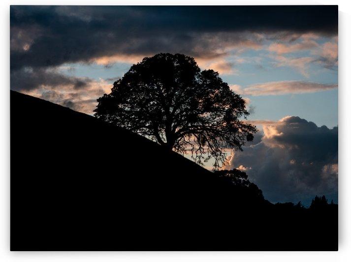 Oak Tree silhouette by Raquel Creative