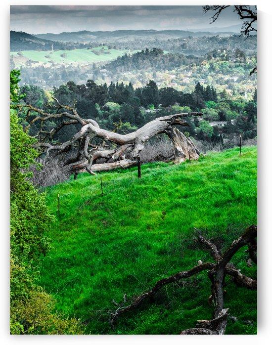 Green Landscape in California by Raquel Creative