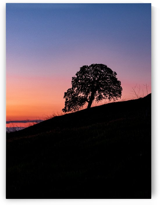Tree Silhouette in Sunset by Raquel Creative