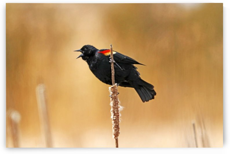 Angry Bird by Deb Oppermann