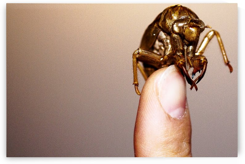 Golden Molt by Andrew Woolner