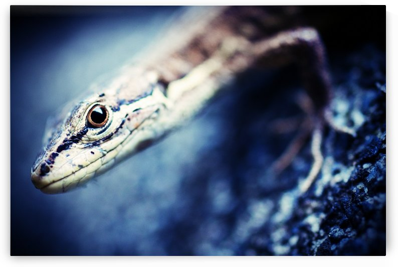 Blue Lizard by Andrew Woolner