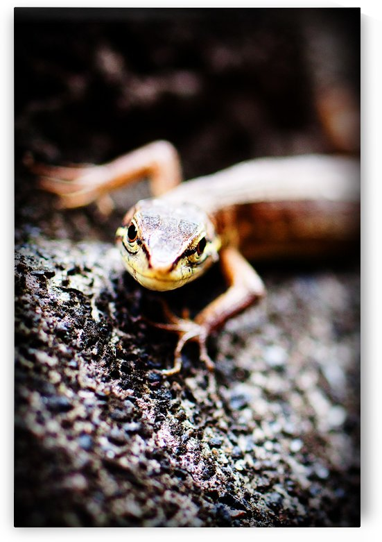 Yellow Lizard by Andrew Woolner