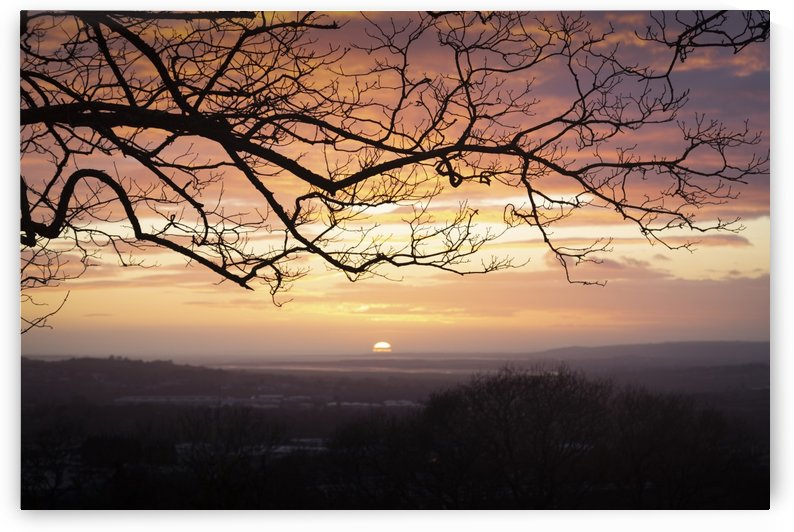 Winter trees and a sunset by Leighton Collins