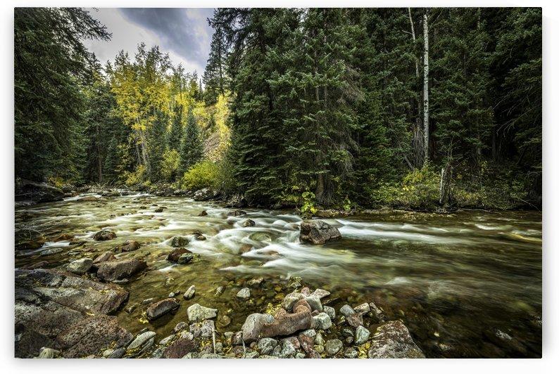 Rocky Mountain Forest by Sebastian Dietl