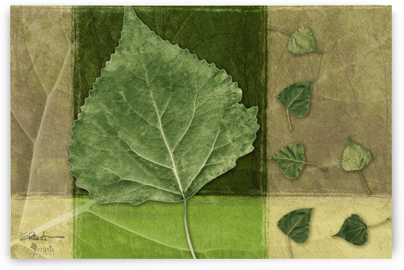 Leaves2 on Forest & Green 3x2 by Veratis Editions