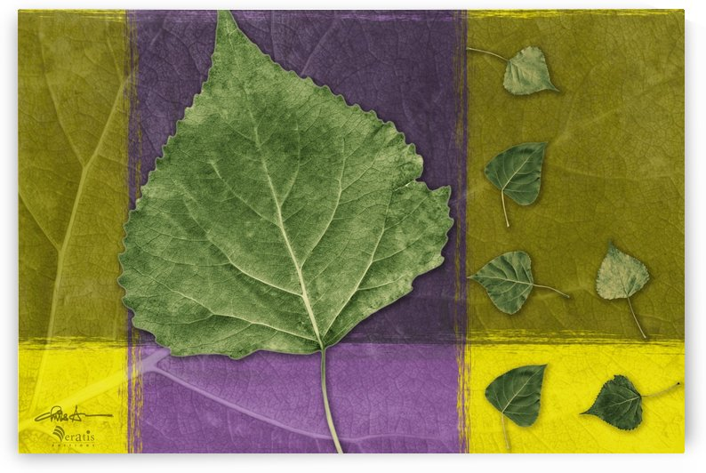 Leaves2 on Indigo & Amethyst 3x2 by Veratis Editions