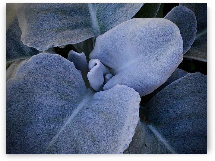 Desert Desire by BotanicalArt ca