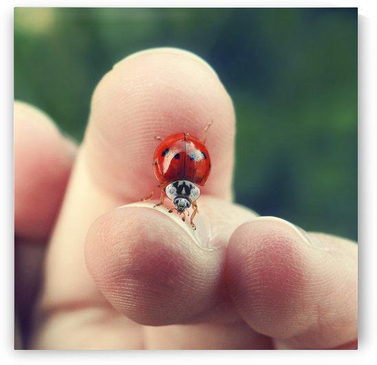 Ladybug Between Fingers by Sarah Goldstein
