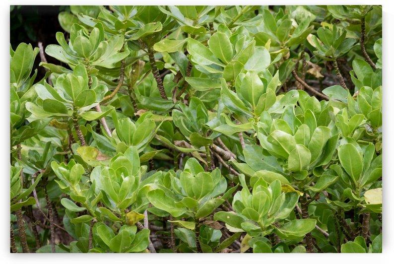 Green Plant   Kauai Hawaii 0903 by @ThePhotourist