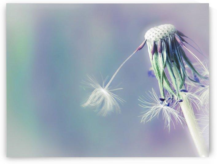 Falling Dandelions by Sarah Goldstein
