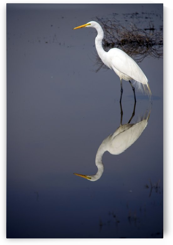 White Egret Reflection by Frank Wilson