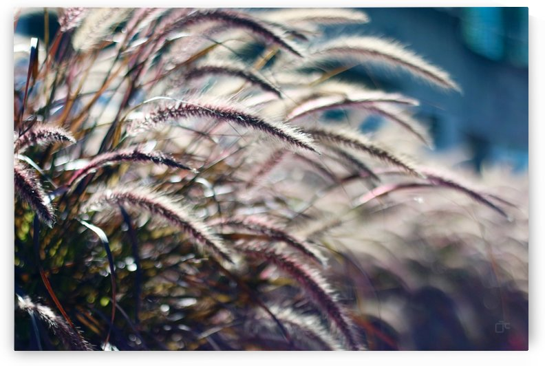 Plants by Aldo Cruz