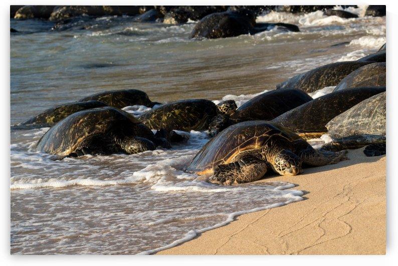 Green Sea Turtles on Hookipa Beach   Maui Hawaii 4396 by @ThePhotourist