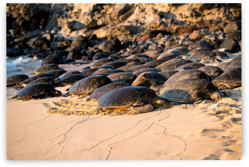 Green Sea Turtles on Hookipa Beach   Maui Hawaii 08518 by @ThePhotourist