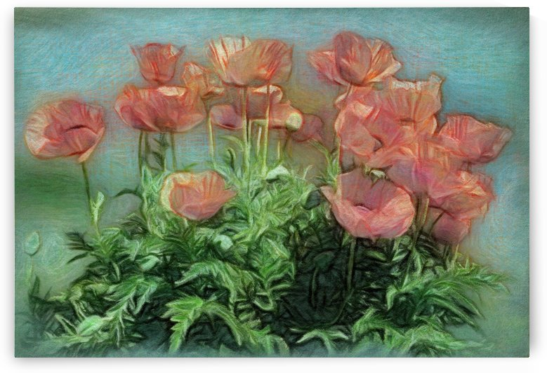 Peachy Poppies In The Garden by Leslie Montgomery