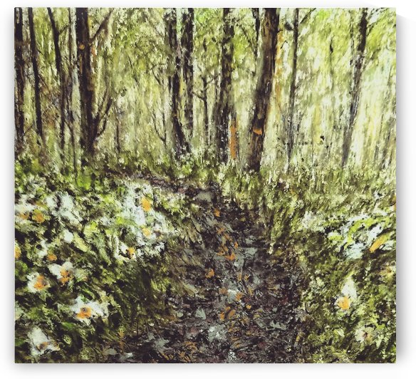 Trillium Trail  by djjf
