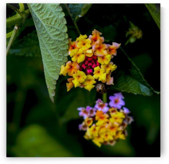 Flora  by Bayaaz