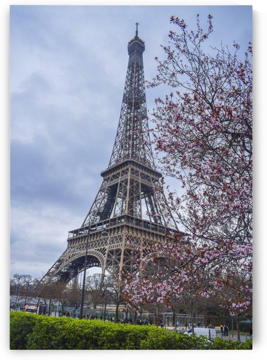 Floral Eiffel tower  by Bayaaz
