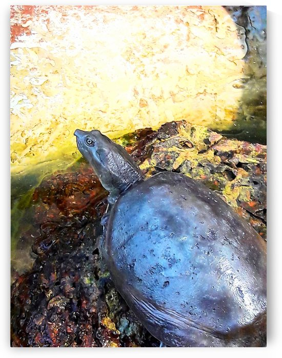 Turtle Putting His Neck Out by Gina Lafont