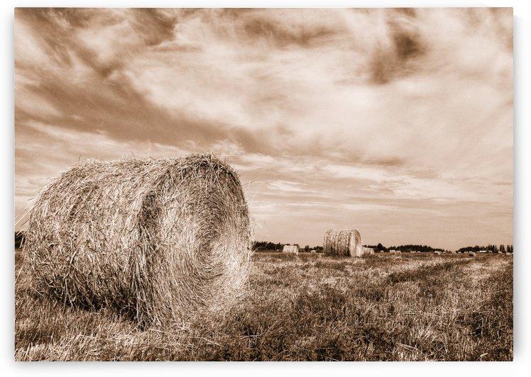 Le temps des foins by Guylaine Charest Artiste Photographe