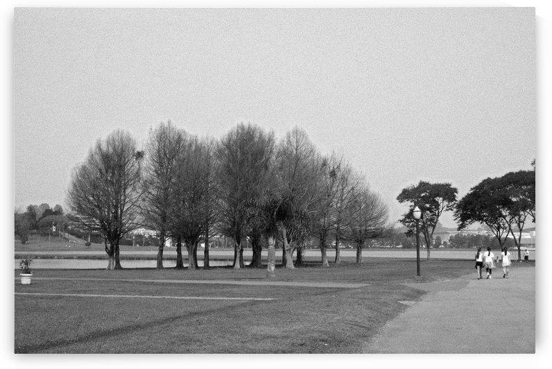 Tree XI by Carlos Wood