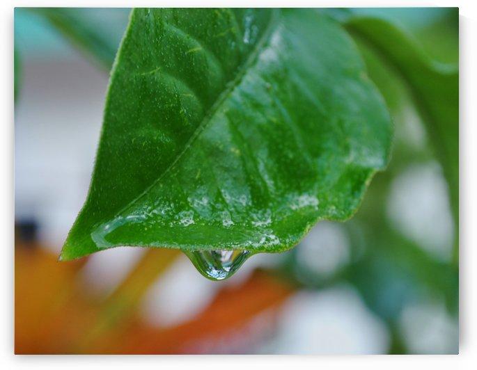 Droplet by On da Raks