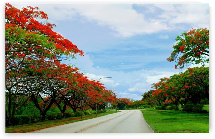Flame Tree Road by On da Raks