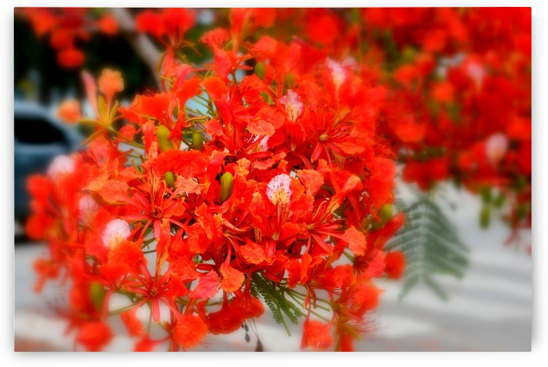 Flame Tree Bouquet by On da Raks