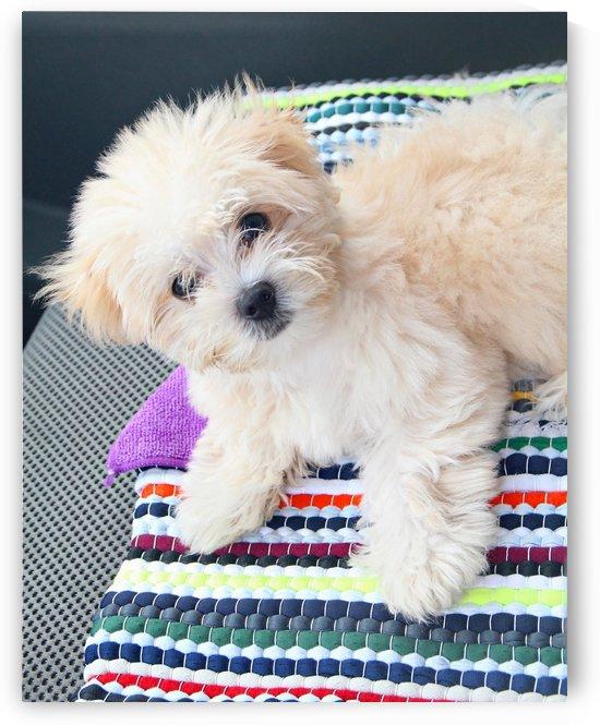 Cute Puppy by On da Raks