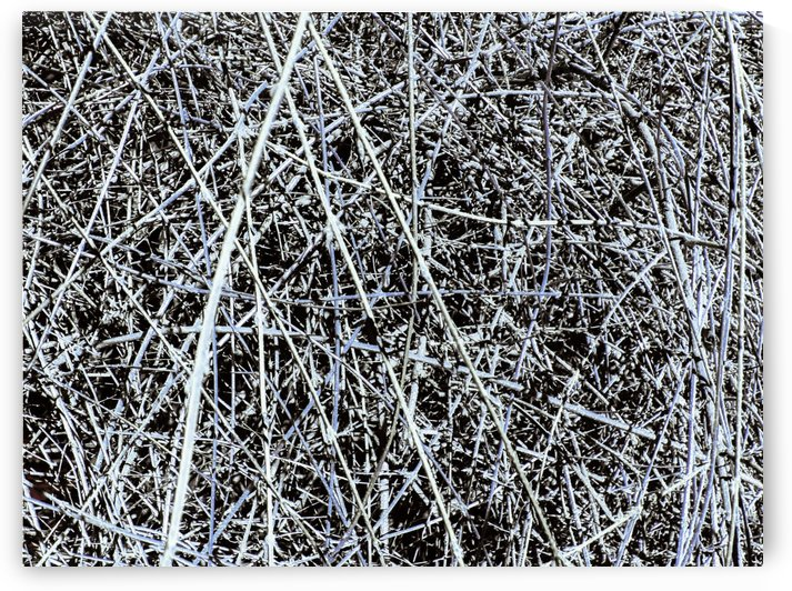 Natures Line Drawing by Daniel Rothenberg