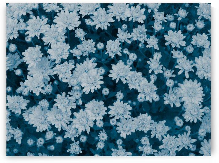 Flowers Floundering by Daniel Rothenberg