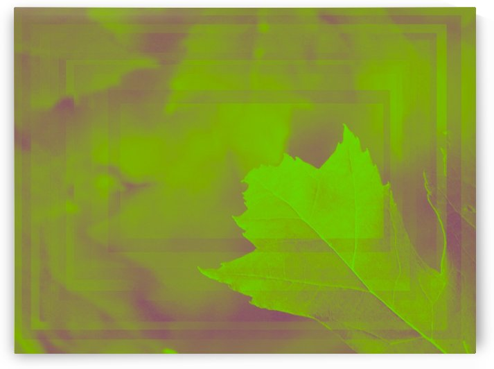 What One Leaf Can Do by Daniel Rothenberg