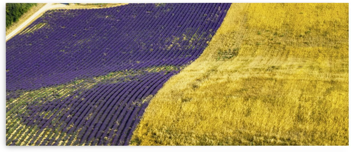 bleetlavande.Wheat and Lavander by Jean louis Gasquet