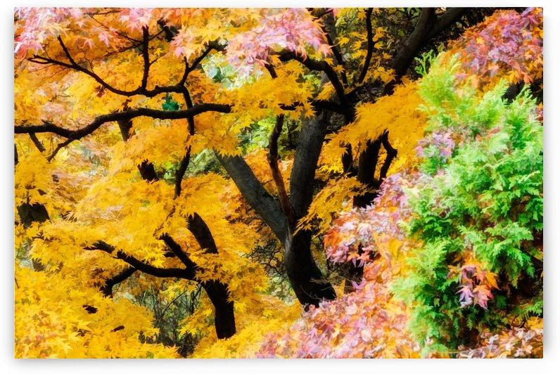 japan garden color tree zen by Shamudy