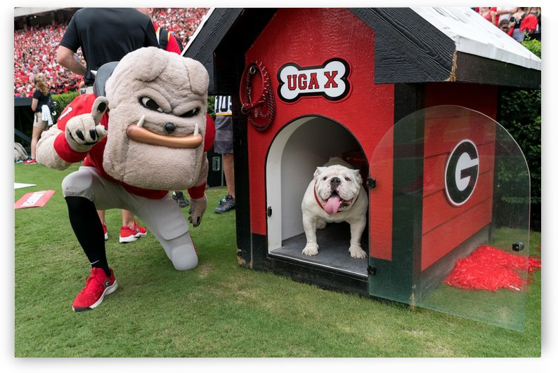 Hairy Dawg Mascot University of Georgia   Athens GA 2907 by @ThePhotourist