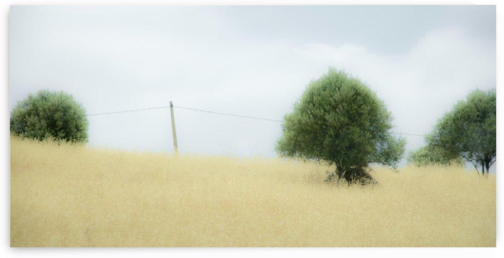 Panorama Prairie Marocaine by Julie Desrochers