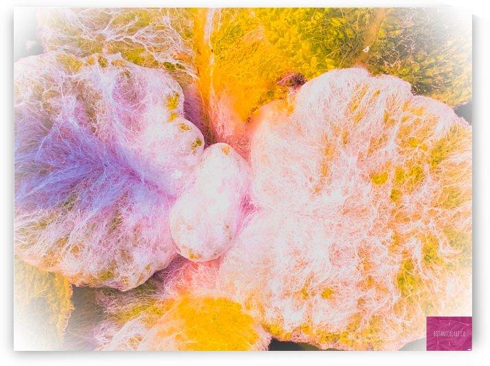 Soft Fuzzy Cactus 2 by BotanicalArt ca