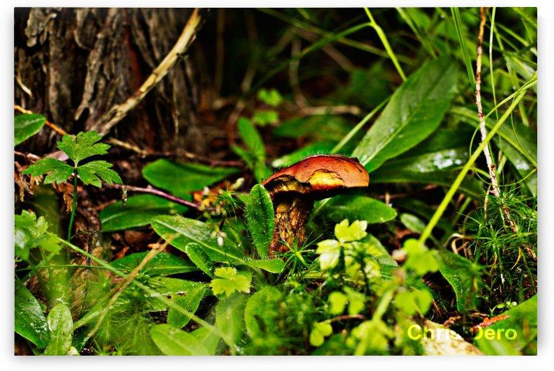 Mushrooms by Chris Dero