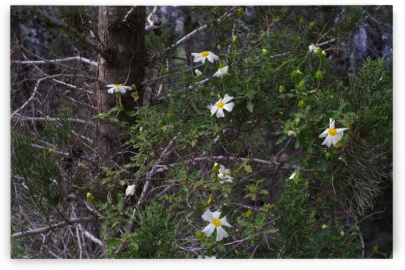 Forest flowers by AndreiPodelko