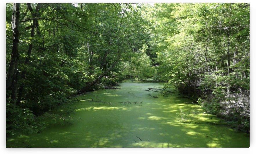 Green Algae Creek by Jeremy Lyman