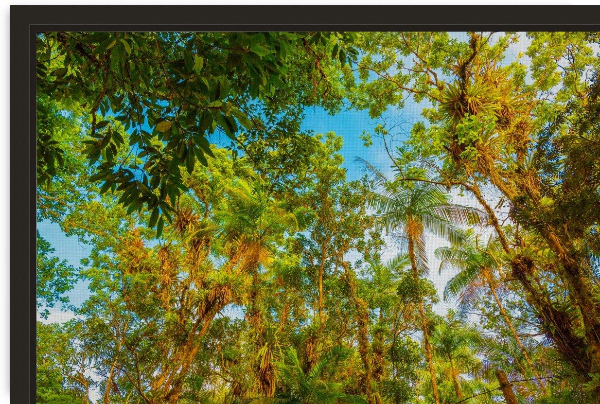 Forest II by Carlos Wood