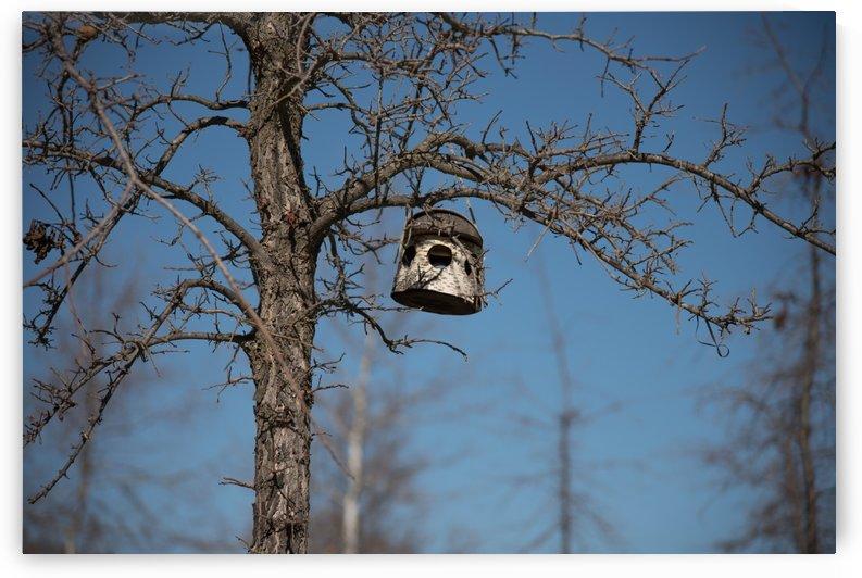 Birdhouse by Konstantin