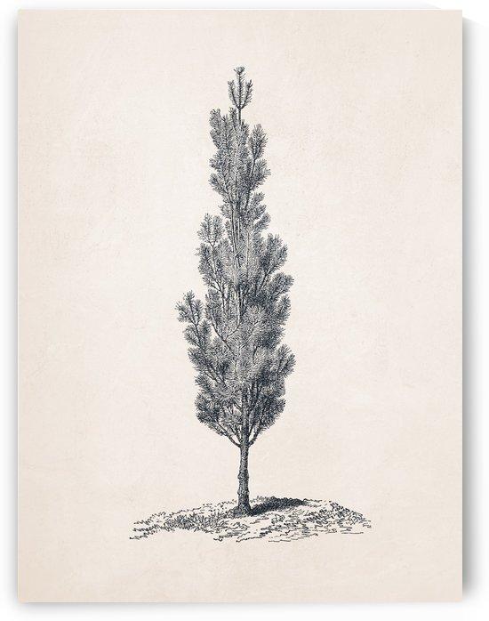 Tree Sketch 04 by Apolo Prints